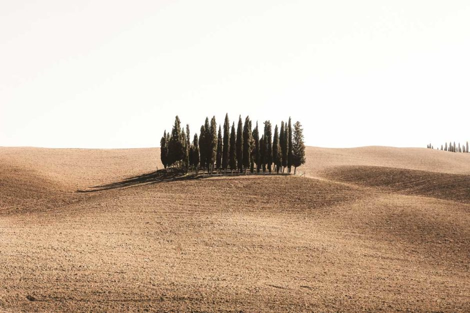 В ЕС проблемами исчезновения лесов на планете займется особая организация